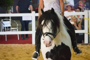STOCK - 2014 Total Equine Expo-62 by fillyrox