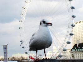 seagull by me3xR