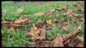 AUTUMN by TOVARDAMASO