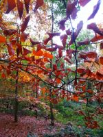 Red Leaves Ready to Fall by sazzyarmani