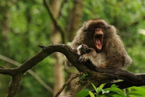 Monkey in the Forest by Yslen