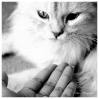 Give me Love by Ehsan84