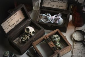 Three boxed specimens . by dodoalbino