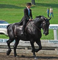 Percheron Riding 1 by shi-stock