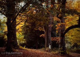 Into the woods by alassea-ancalimon