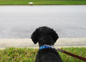 Tippy focused on the Ibis by knighttemplar1