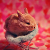 Little bunny by Vicimuzy11