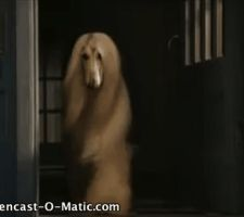 Afghan Hound animation! by DixieDevated