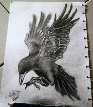 Crow by arin666