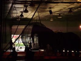 The Circus Elephant... by Lonewolf-Eyes
