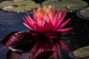 Lovely Lotus by 904PhotoPhactory