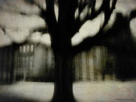 Surreal Tree #1 by VividThorn