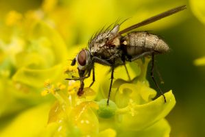 Fly on Flower 2 by Alliec