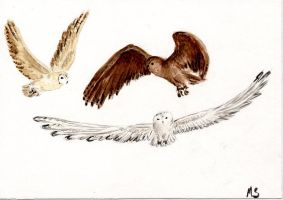 Owls by bofink