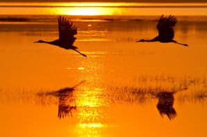 SANDHILL SUNSET by nwo