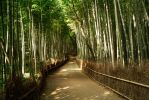 Bamboo Forest Path by TimGrey