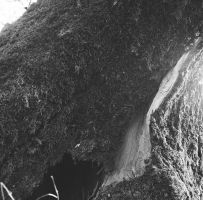 Delta - Ilford - broken moss by Picture-Bandit