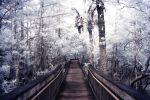 Path to the White Forest by jeremyfe