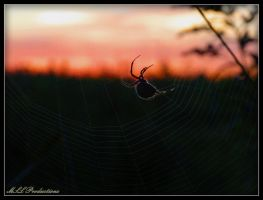 Spider at Sunset by Dracoart