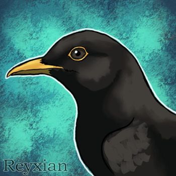 Common Blackbird by Reyxian
