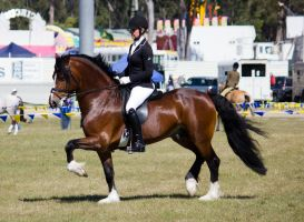 STOCK - Gold Coast show 349 by fillyrox
