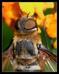 Drone Fly II by Eccoton