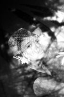 Caged (56/365) by RiparianVeins