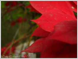 Red Foliage by DanyValente
