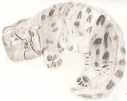 Snow Leopard Cub. by Darkness-Fang