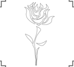 Adam Taurus - Back Design Rose by coloursupply