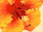 hibiscus II by painfullyxuncool