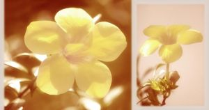 Yellow With Age by lomocotion