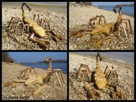 Land art scorpion in hungary by tamas kanya by tom-tom1969