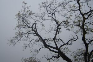 Tree Branches by carlylecastle