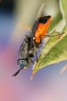 Colorful Fly by ELKAPL