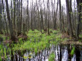 Swamps XIV by Vrolok-stock