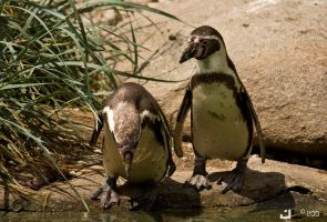 penguins by iNvasive
