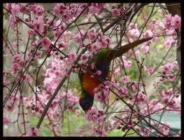 Birds Love Sakura - 2 by Lilithia