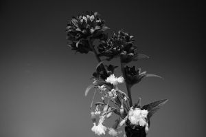 BnW Flowers by Six95