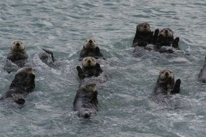 waving otters by DennisDawg