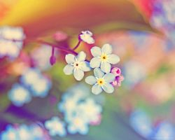 rainbow flowers. by magnesina