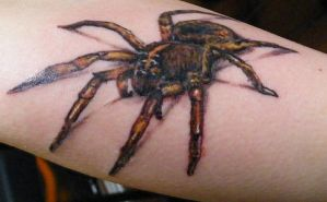 second spider by Pauleth