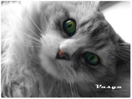 My cat Vasya by kaminary-san