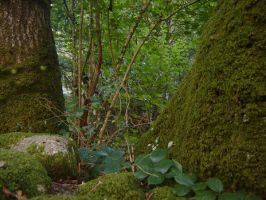 The Ent 2 Brontol by dxniela