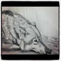 Wolf Sketch by Taylormarie24