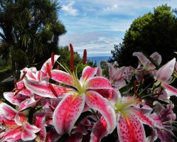 Lilies Overlooking the Sea by basement-ghost