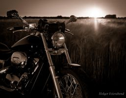 Riding into the sunset by fholger