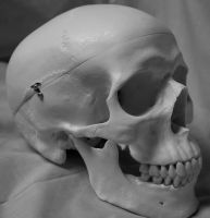 Skull Photo Stock 10 by CcTheMonkey