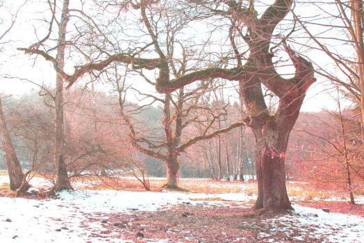 red winter tree by Lilienmeer