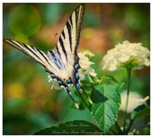 Tiger Sowtail Butterfly by LeonorGracias